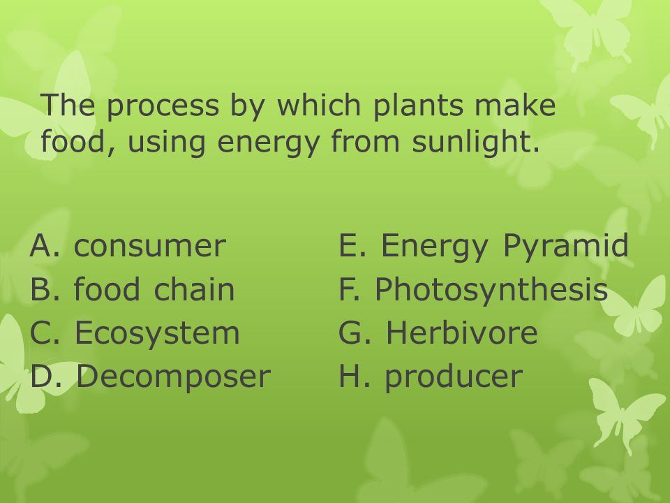 The process by which plants make food, using energy from sunlight.