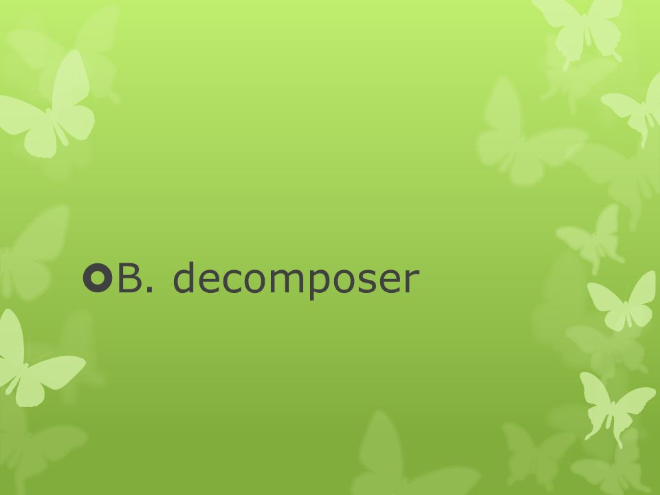 B. decomposer