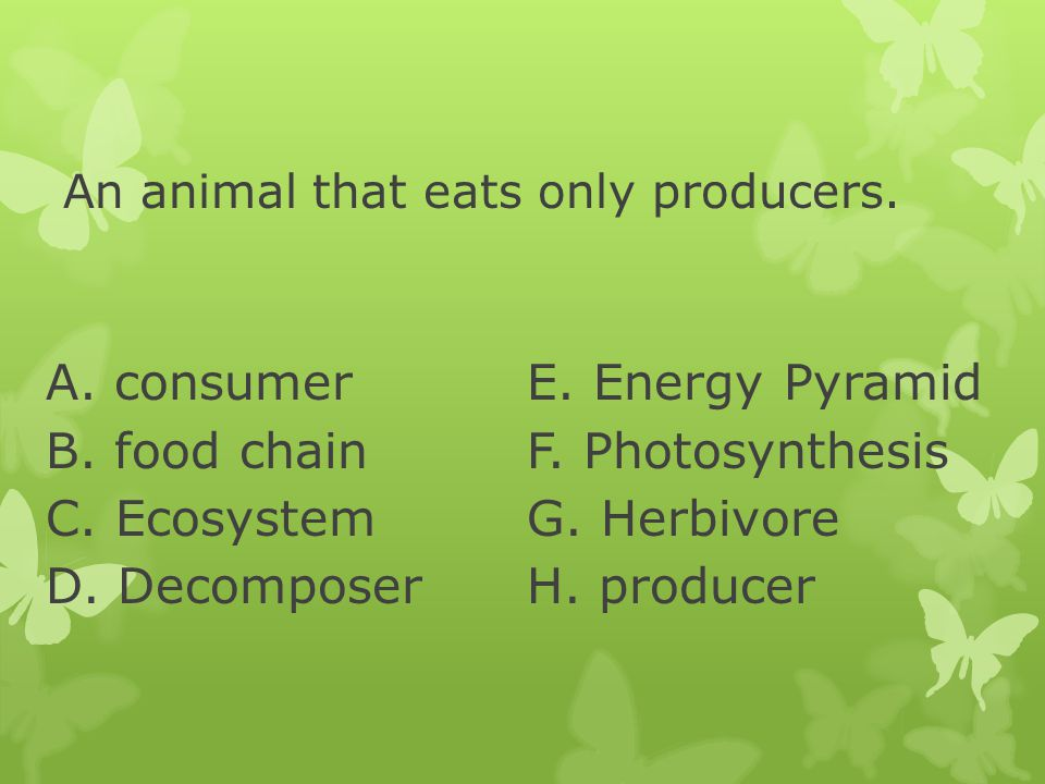 An animal that eats only producers.