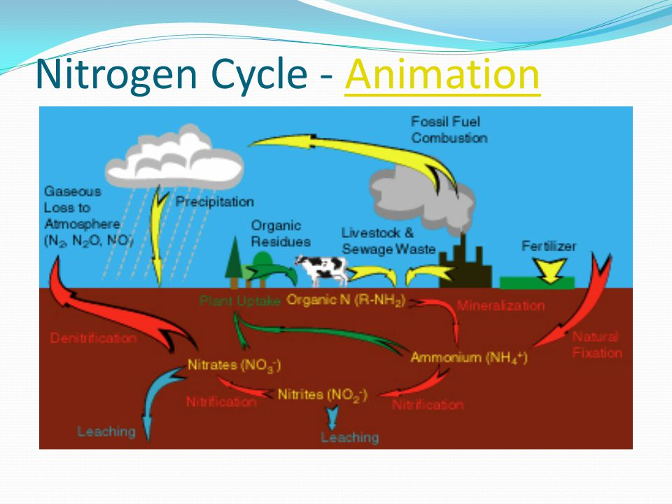 Nitrogen Cycle - Animation