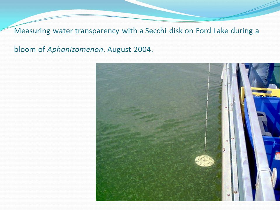 Measuring water transparency with a Secchi disk on Ford Lake during a bloom of Aphanizomenon.