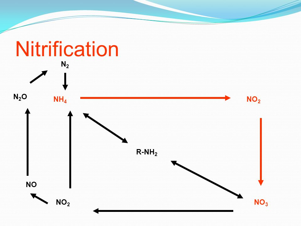 Nitrification N2 N2O NH4 NO2 R-NH2 NO NO2 NO3