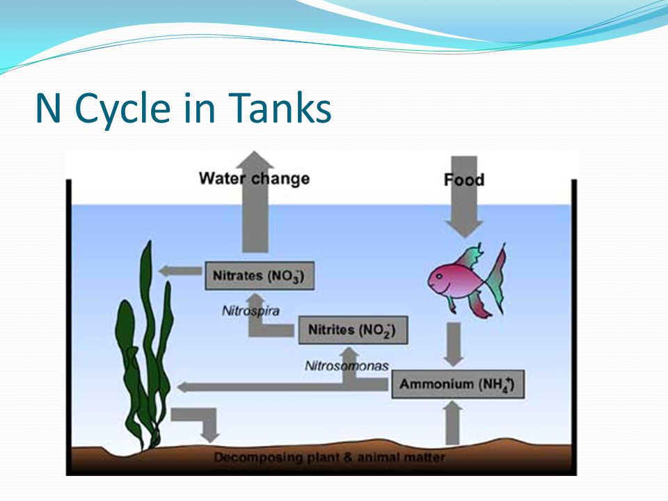 N Cycle in Tanks