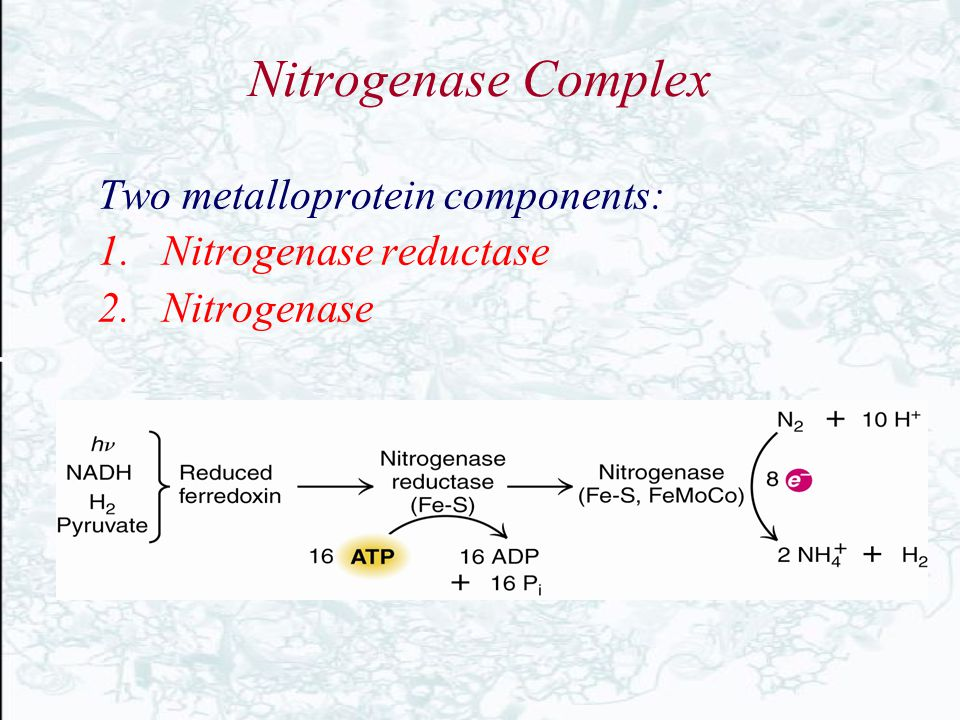 Nitrogenase Complex Two metalloprotein components: