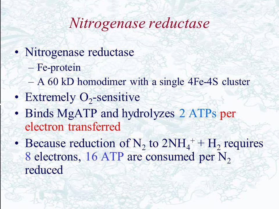 Nitrogenase reductase
