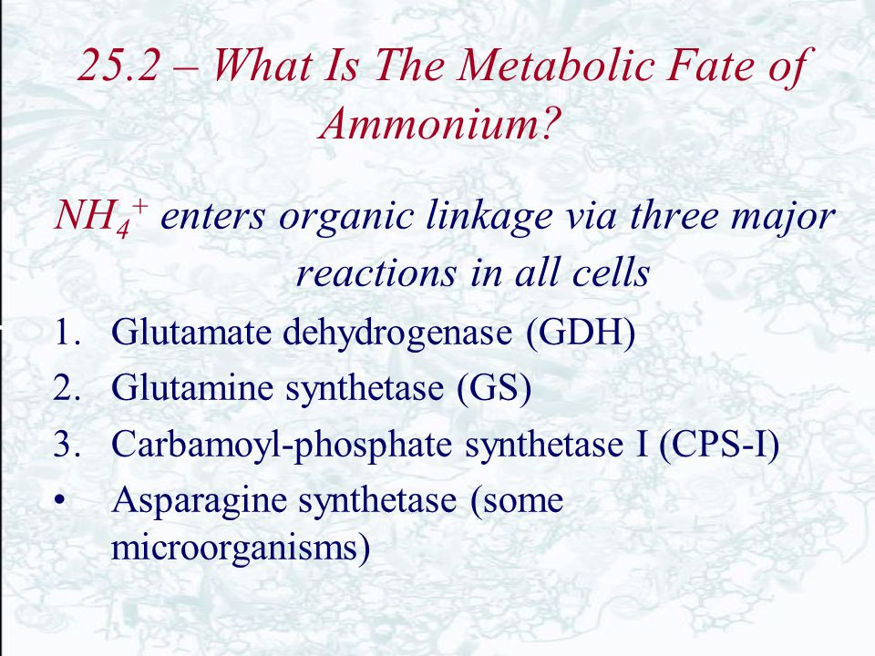25.2 – What Is The Metabolic Fate of Ammonium