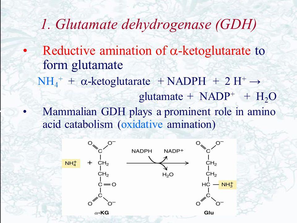 1. Glutamate dehydrogenase (GDH)