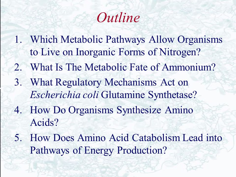Outline Which Metabolic Pathways Allow Organisms to Live on Inorganic Forms of Nitrogen What Is The Metabolic Fate of Ammonium