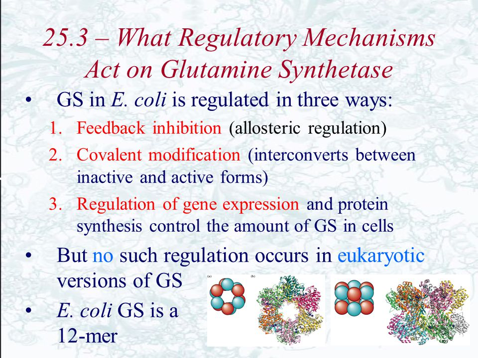25.3 – What Regulatory Mechanisms Act on Glutamine Synthetase