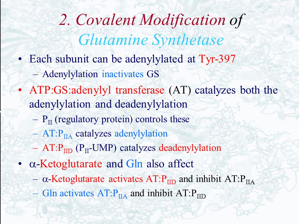2. Covalent Modification of Glutamine Synthetase