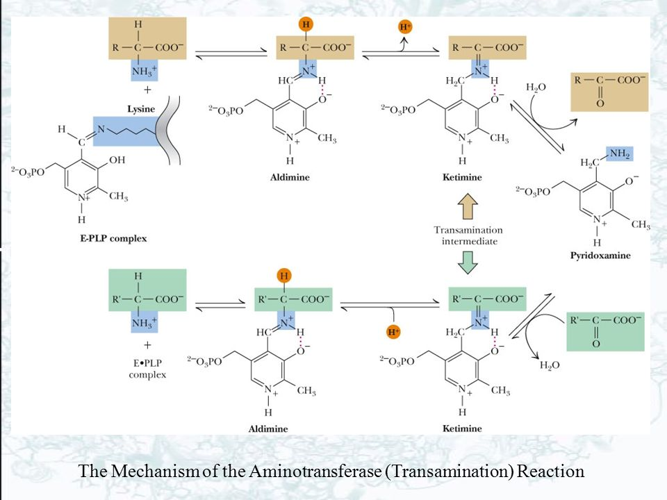 The Mechanism of the Aminotransferase (Transamination) Reaction