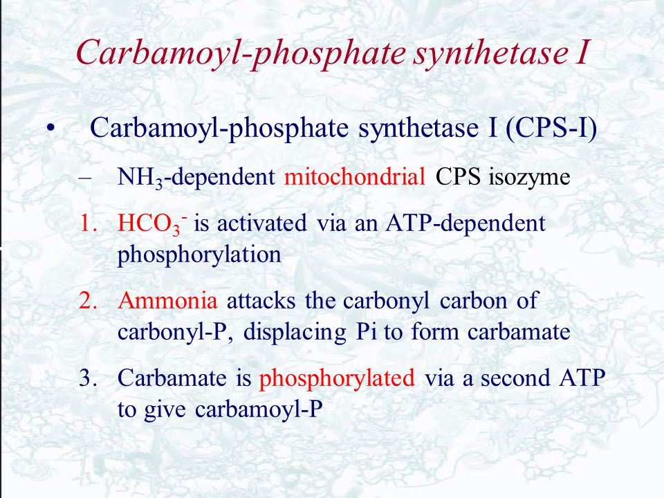 Carbamoyl-phosphate synthetase I