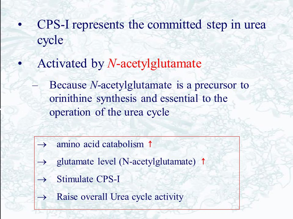 CPS-I represents the committed step in urea cycle