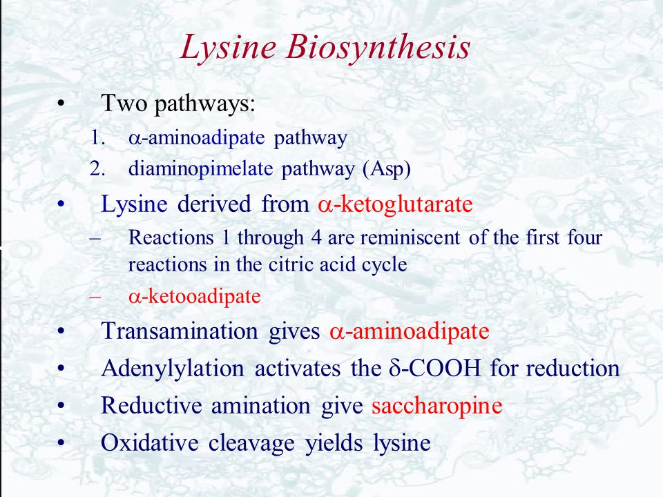 Lysine Biosynthesis Two pathways: Lysine derived from -ketoglutarate