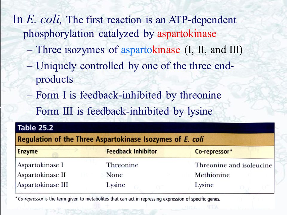 In E. coli, The first reaction is an ATP-dependent phosphorylation catalyzed by aspartokinase