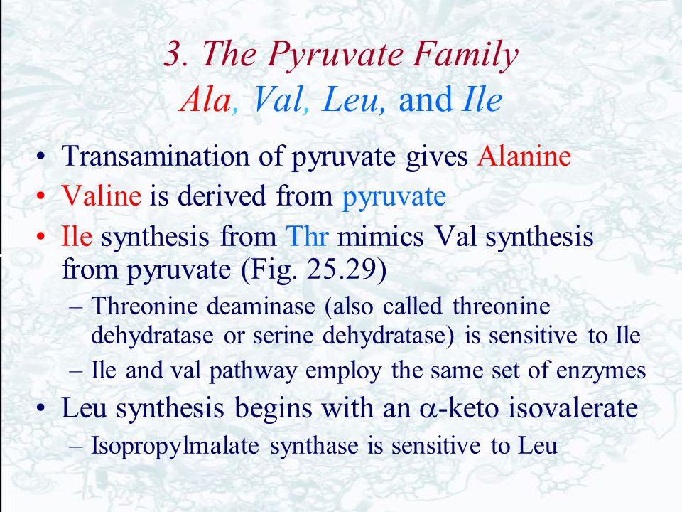 3. The Pyruvate Family Ala, Val, Leu, and Ile