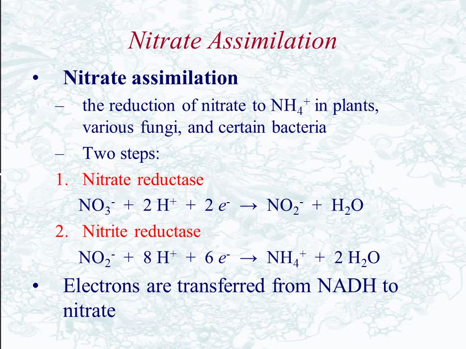 Nitrate Assimilation Nitrate assimilation