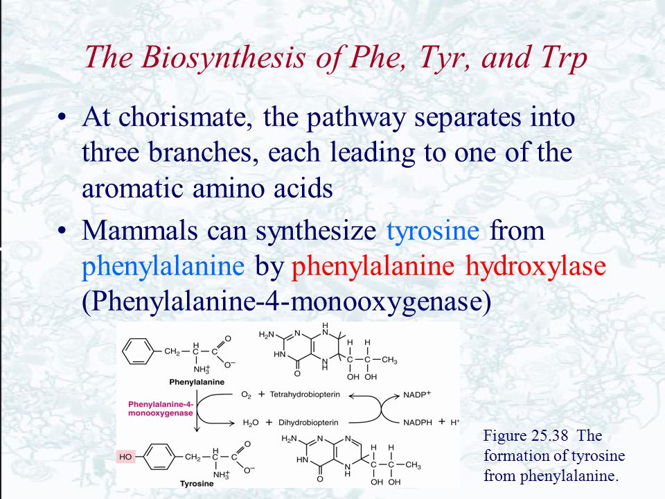 The Biosynthesis of Phe, Tyr, and Trp