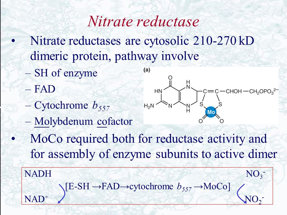 Nitrate reductase Nitrate reductases are cytosolic 210-270 kD dimeric protein, pathway involve. SH of enzyme.