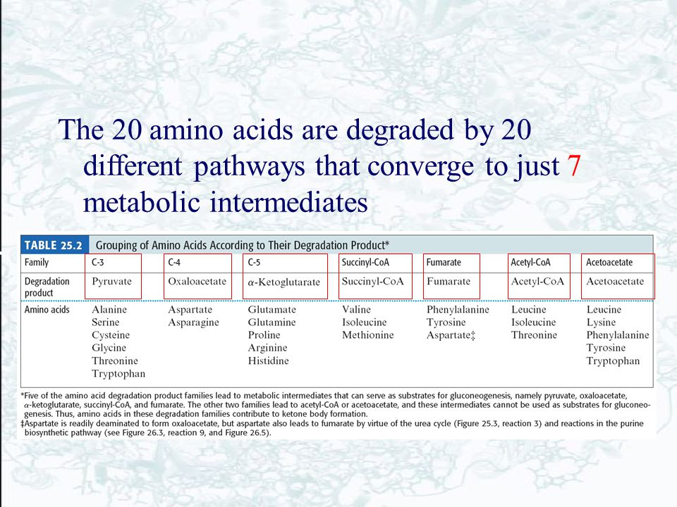 The 20 amino acids are degraded by 20 different pathways that converge to just 7 metabolic intermediates