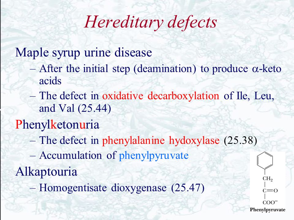 Hereditary defects Maple syrup urine disease Phenylketonuria