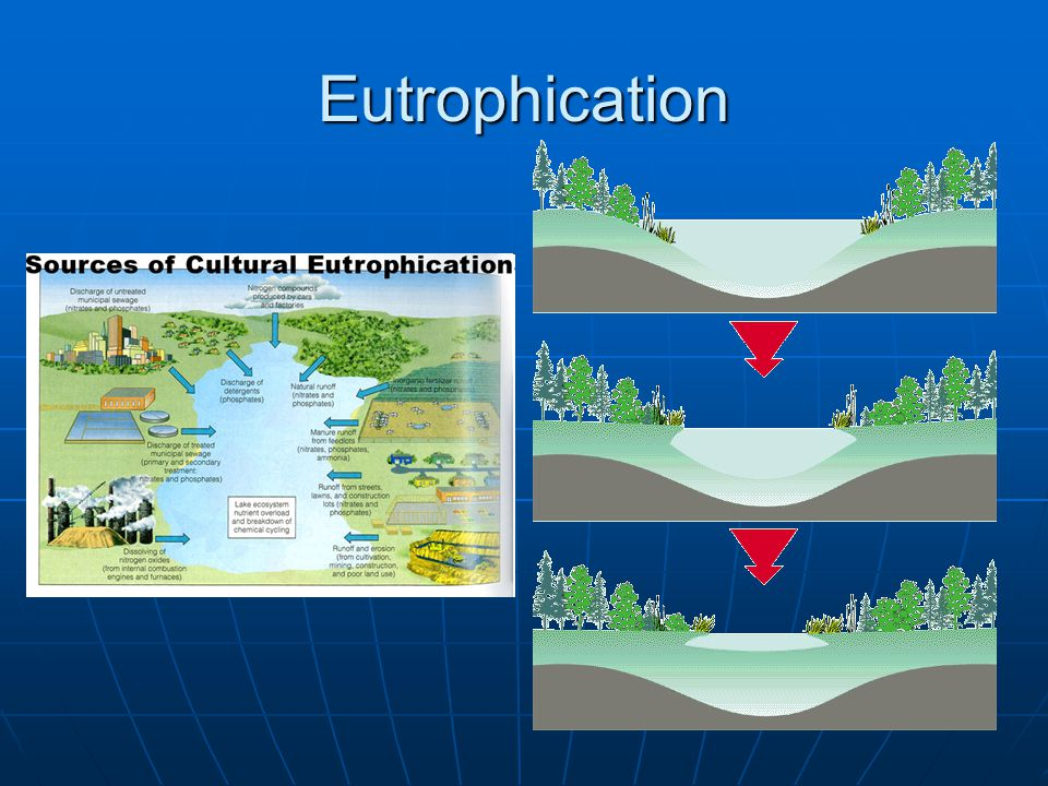 Eutrophication