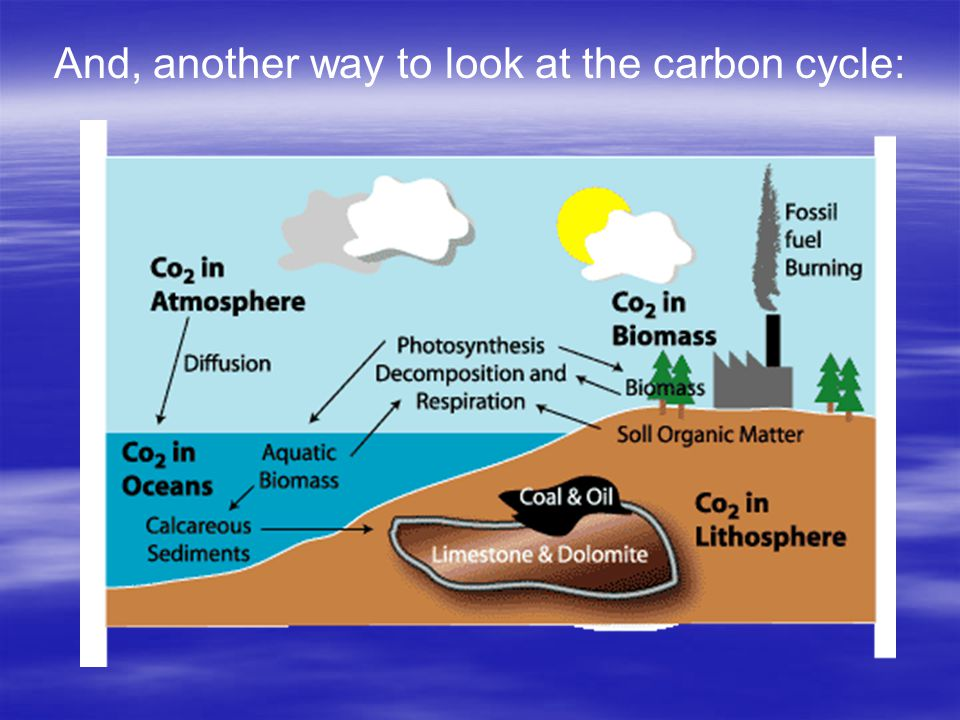 And, another way to look at the carbon cycle: