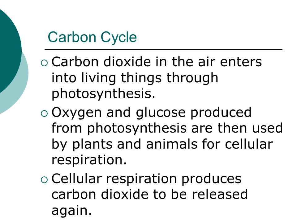Carbon Cycle Carbon dioxide in the air enters into living things through photosynthesis.