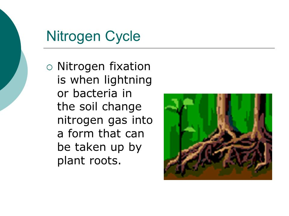 Nitrogen Cycle Nitrogen fixation is when lightning or bacteria in the soil change nitrogen gas into a form that can be taken up by plant roots.