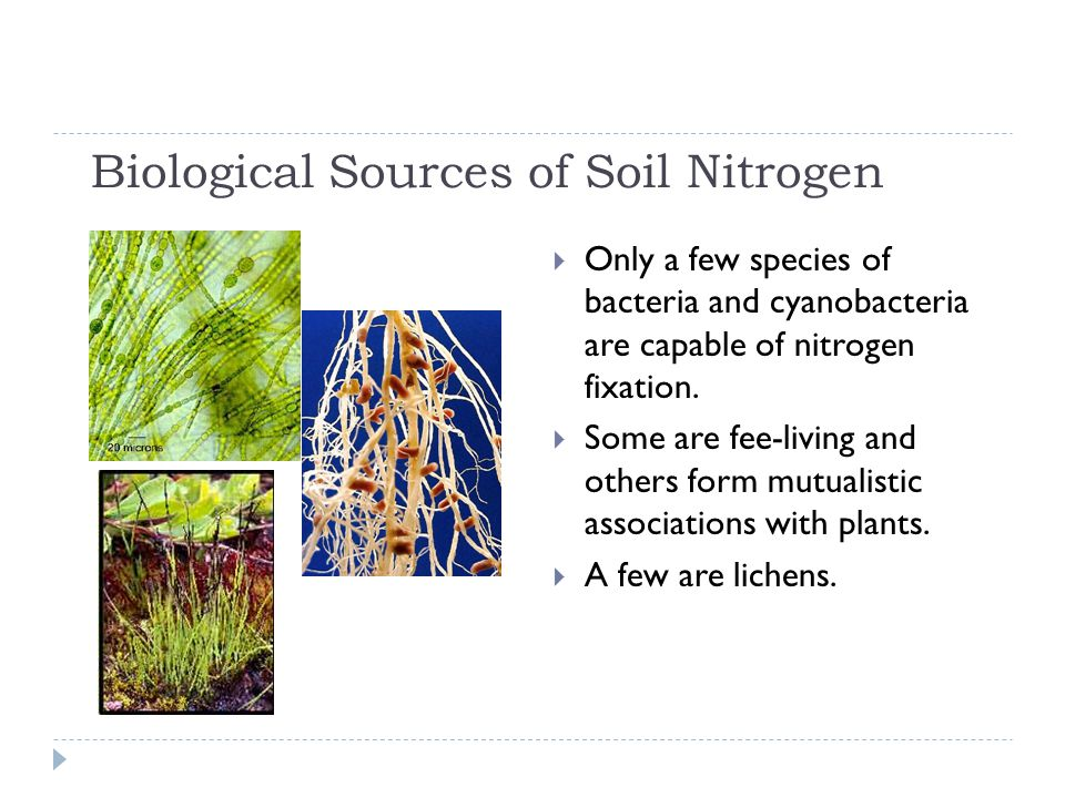 Biological Sources of Soil Nitrogen