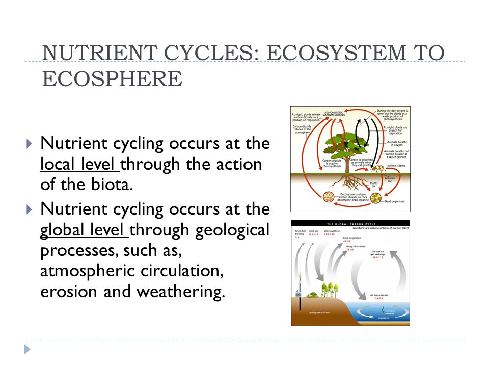 NUTRIENT CYCLES: ECOSYSTEM TO ECOSPHERE