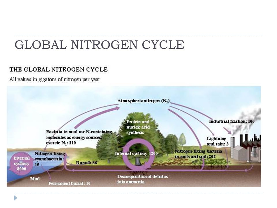 GLOBAL NITROGEN CYCLE