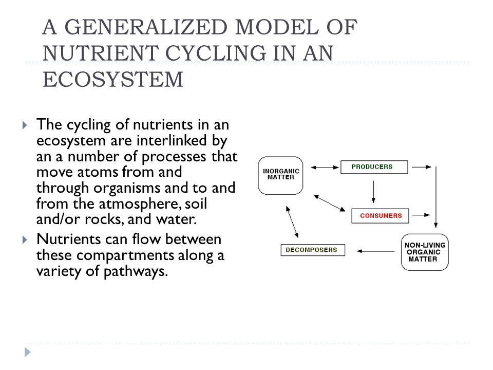 A GENERALIZED MODEL OF NUTRIENT CYCLING IN AN ECOSYSTEM