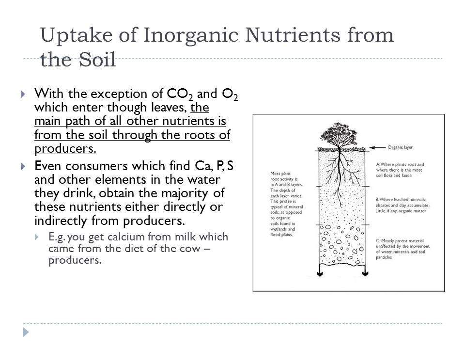 Uptake of Inorganic Nutrients from the Soil
