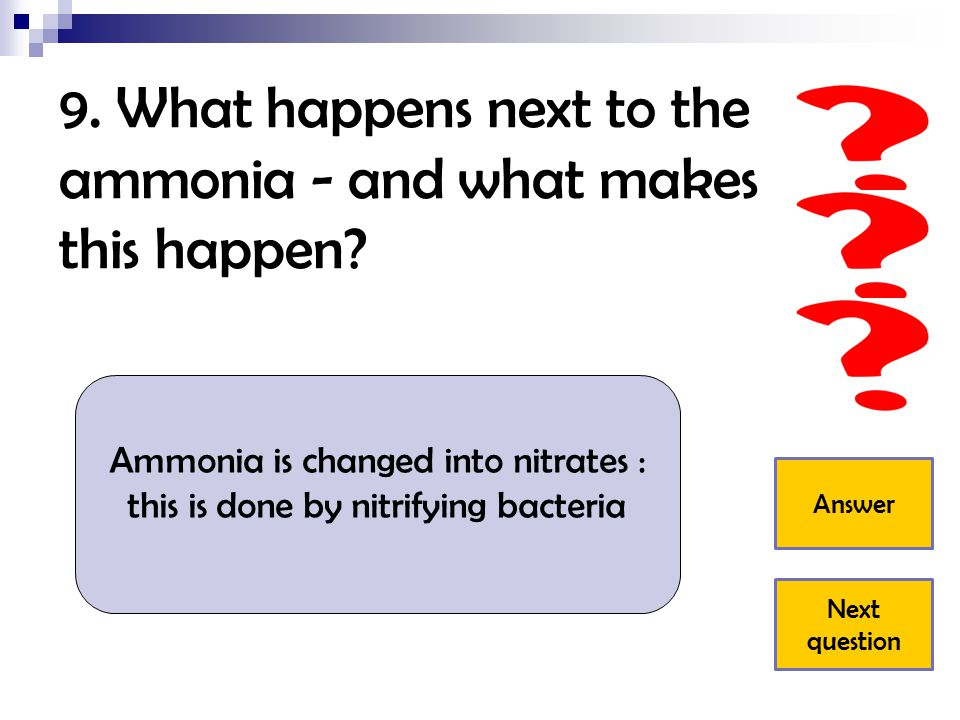 9. What happens next to the ammonia - and what makes this happen