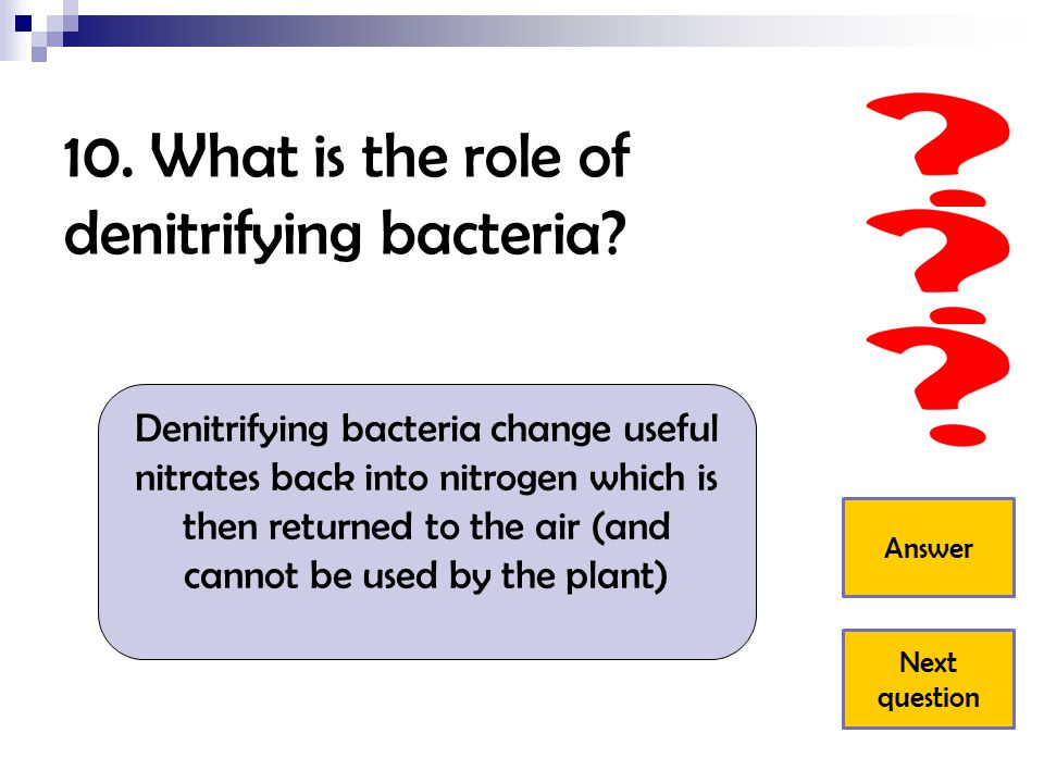 10. What is the role of denitrifying bacteria
