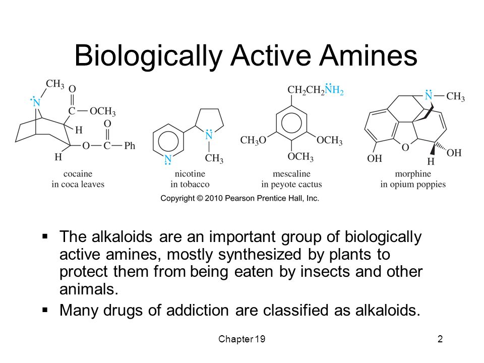 Biologically Active Amines