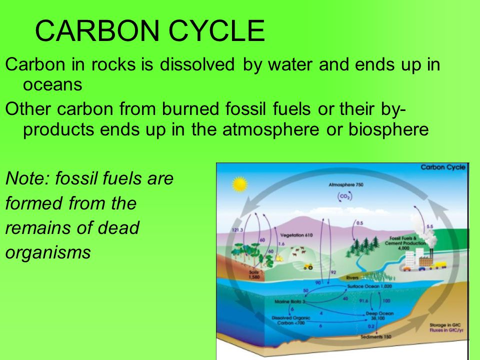 CARBON CYCLE Carbon in rocks is dissolved by water and ends up in oceans.