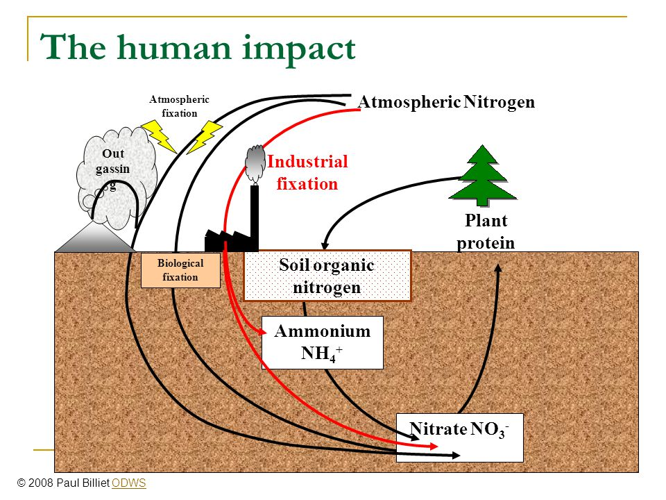 The human impact Atmospheric Nitrogen Industrial fixation