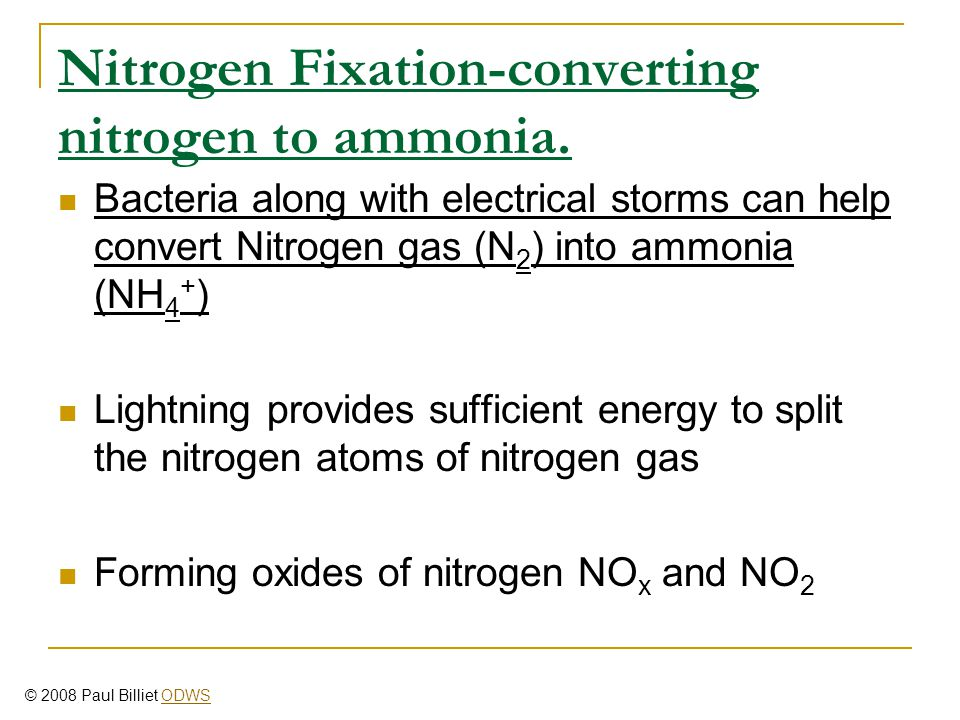 Nitrogen Fixation-converting nitrogen to ammonia.