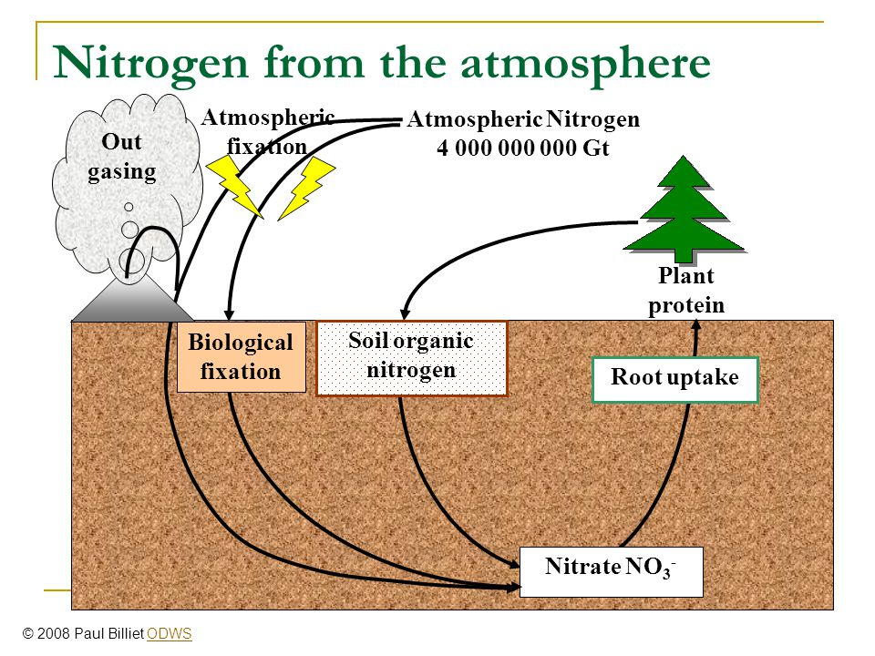Nitrogen from the atmosphere