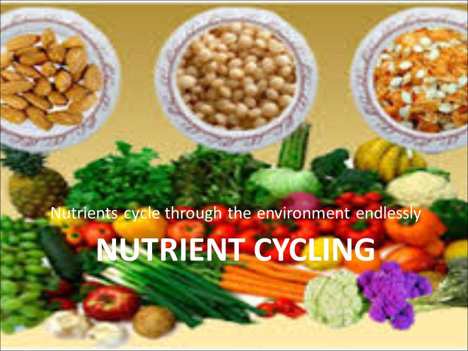 Nutrients cycle through the environment endlessly