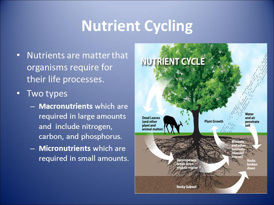 Nutrient Cycling Nutrients are matter that organisms require for their life processes. Two types.