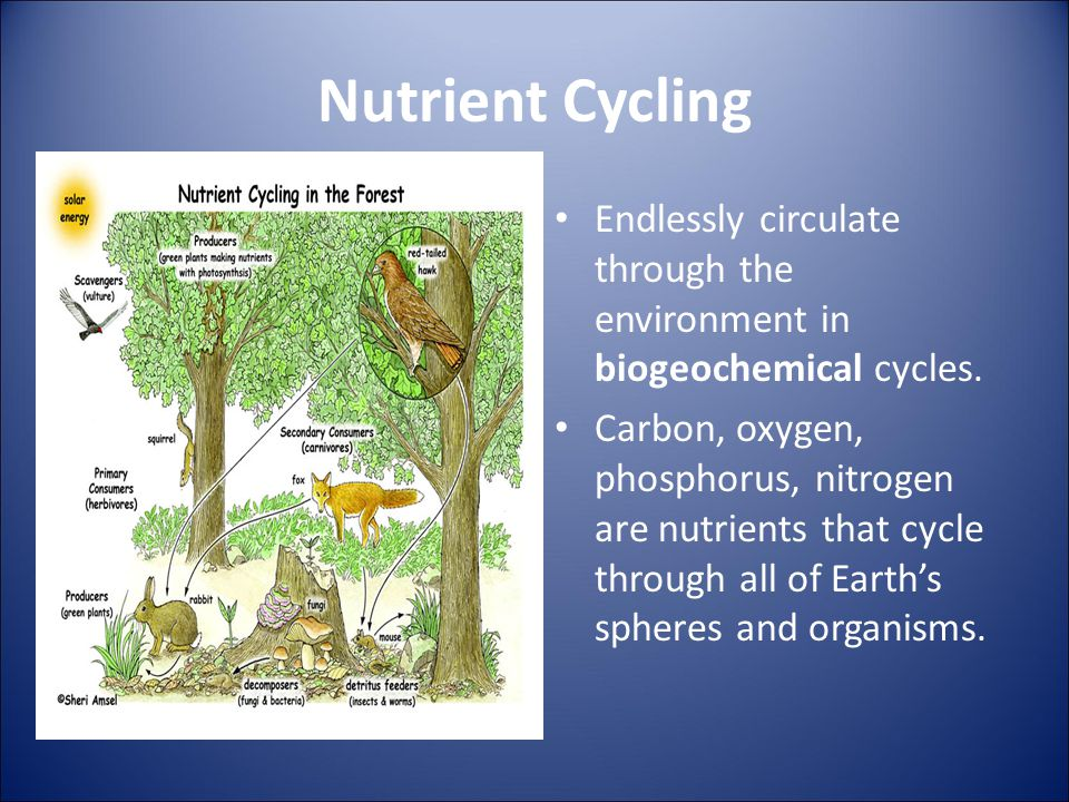 Nutrient Cycling Endlessly circulate through the environment in biogeochemical cycles.