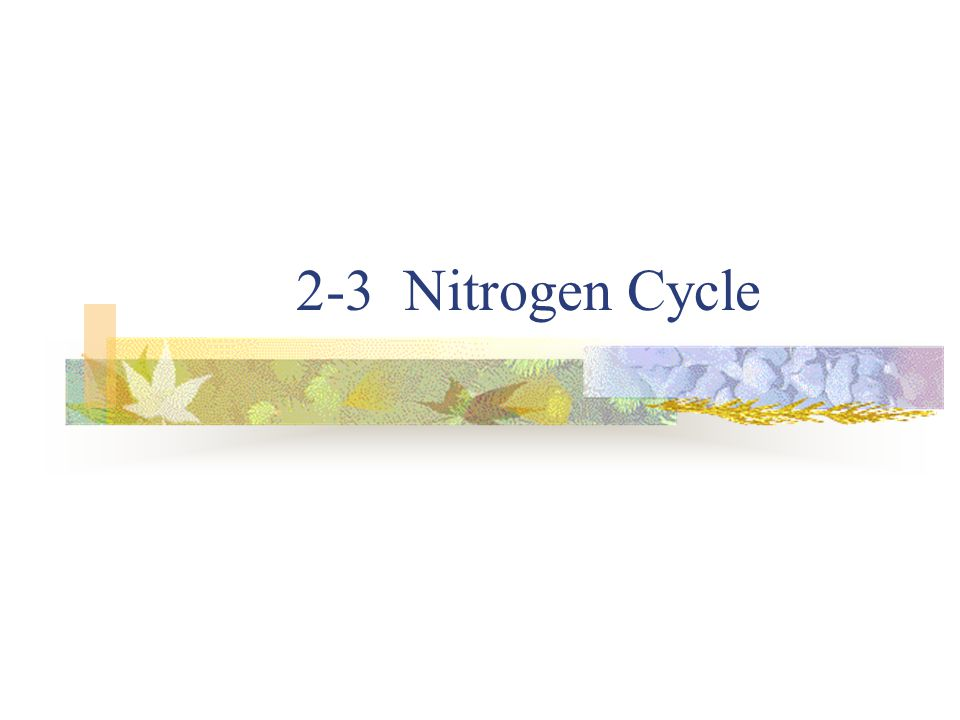 2-3 Nitrogen Cycle