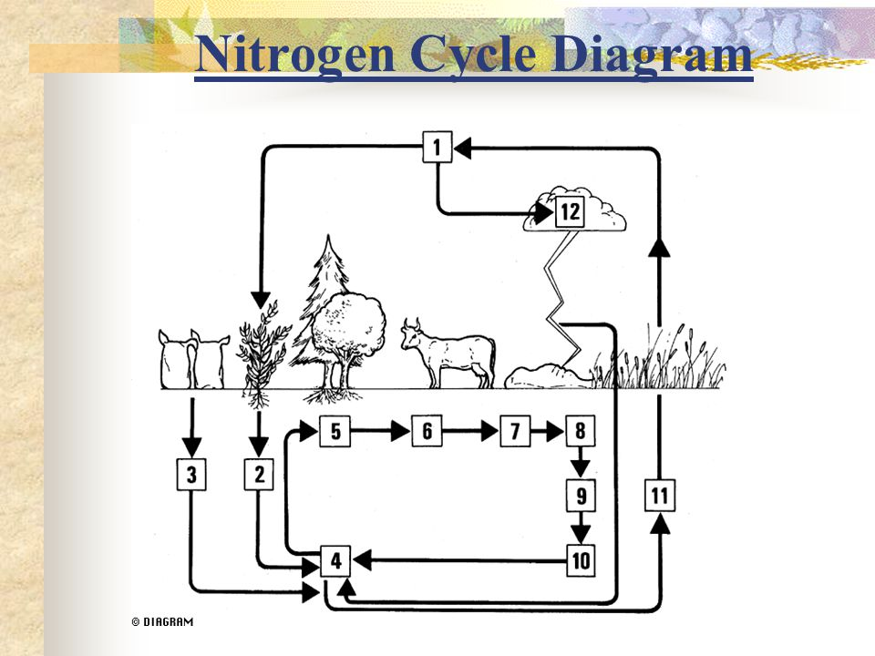 2 3 nitrogen cycle ppt video online download 13 nitrogen cycle diagram ccuart Image collections