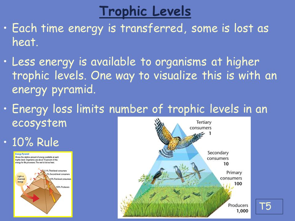Trophic Levels Each time energy is transferred, some is lost as heat.