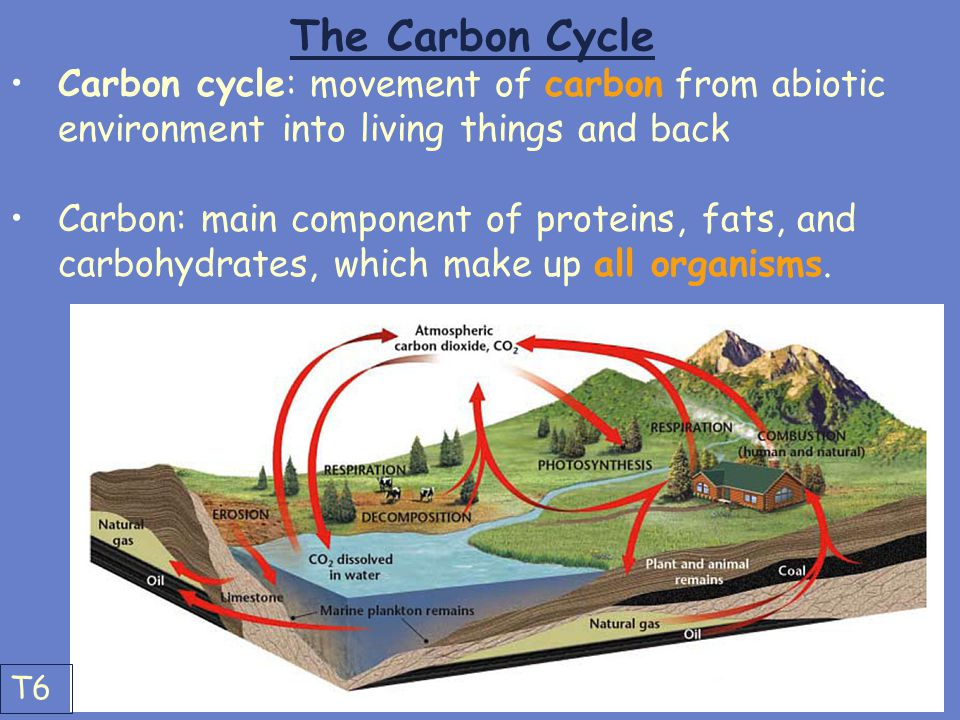 The Carbon Cycle Carbon cycle: movement of carbon from abiotic environment into living things and back.