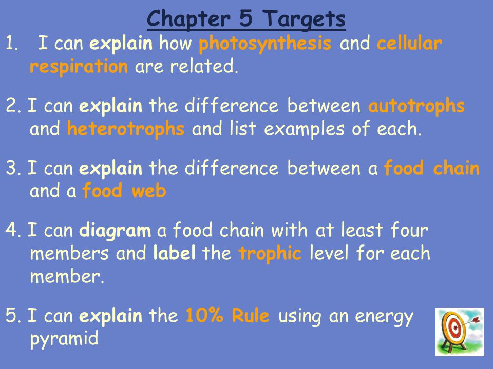 Chapter 5 Targets I can explain how photosynthesis and cellular respiration are related.