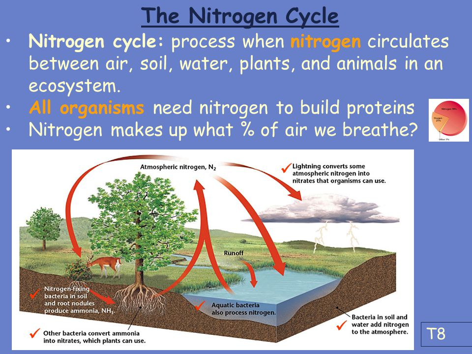 The Nitrogen Cycle Nitrogen cycle: process when nitrogen circulates between air, soil, water, plants, and animals in an ecosystem.